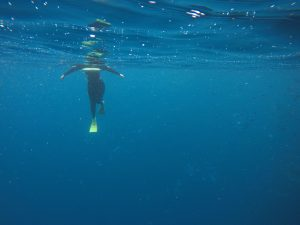Snorkelling at Poor Knights Island